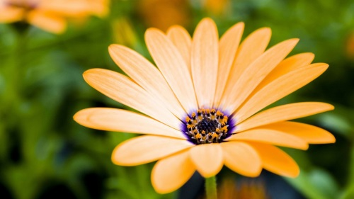 10月8日の誕生花の意味|花言葉...